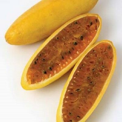 CL003 Banana Passionfruit x10 seeds Pink Flowering Passionfruit Delicious Exotic