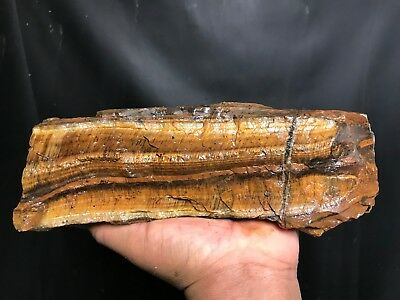 New!! Top Grade Aaa++Thick Golden Tigers Eye Rough - 6.5 Pounds - From Africa