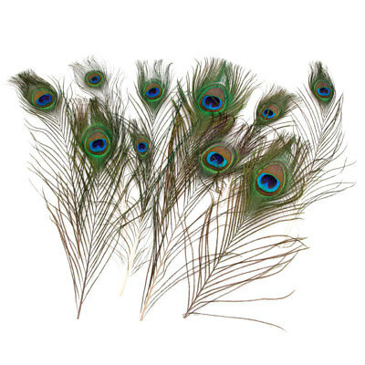 10pcs Whole Sale Natural Peacock Tail Feathers 10-12 Inches New Craft/Art/Dress