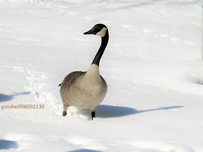 Single bird in snow-Photo Picture Digital  Wallpaper starts at One1 Cent Penny -