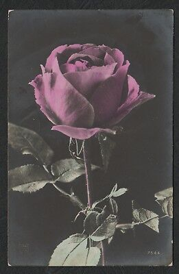 e2235)      GREETINGS POSTCARD FROM 1908 -   A  BEAUTIFUL ROSE