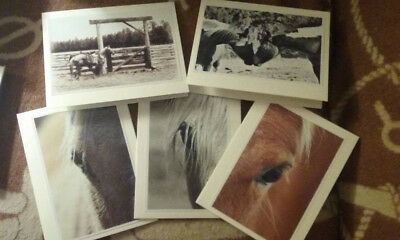 Western Horse Cowboy Cowgirl Photo Art Cards 5 x 7 (5 pack)