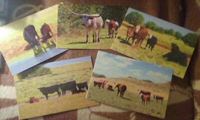 Western Cow Cowboy Cowgirl Photo Art Cards 5 x 7 (5 pack)