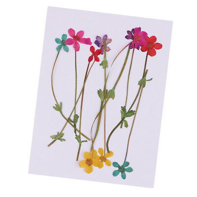 10pcs Real Pressed/Dried Flower for DIY Scrapbooking Card Making Arts Crafts