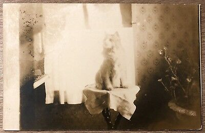 Rppc Real Photo Postcard Of Sitting Cat On Stand