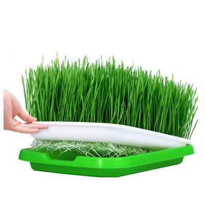 Hydroponics Seedling Tray Vegetable Sprout Plate System Nursery Pots Wheat Grass