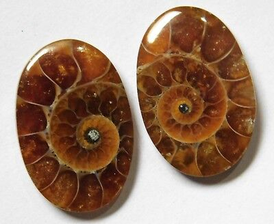 23.10 Cts Natural Ammonite (22mm X 15mm each) Loose Cabochon Match Pair