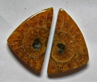 12.85 Cts Natural Ammonite (20.7mm X 12mm each) Loose Cabochon Match Pair