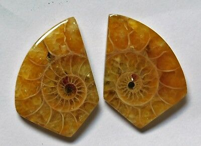 32.10 Cts Natural Ammonite (27mm X 19mm each) Loose Cabochon Match Pair