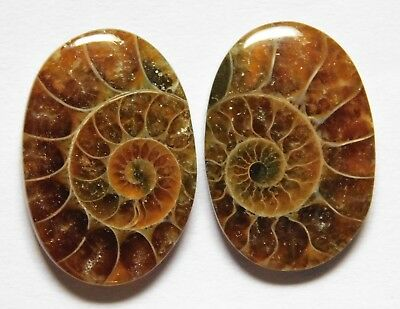 16.30 Cts Natural Ammonite (19mm X 13mm each) Loose Cabochon Match Pair