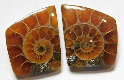 19.50 Cts Natural Ammonite (21.7mm X 18mm each) Loose Cabochon Match Pair