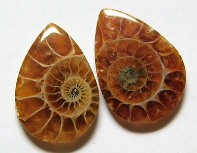21.25 Cts Natural Ammonite (21.7mm X 15mm each) Loose Cabochon Match Pair A08