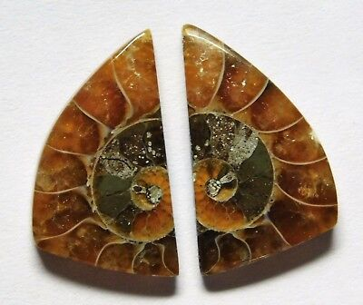 13.60 Cts Natural Ammonite (19.5mm X 11mm each) Loose Cabochon Match Pair