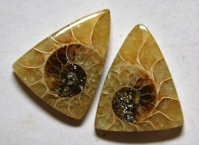 17.05 Cts Natural Ammonite (20mm X 15.5mm each) Loose Cabochon Match Pair A05