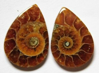 14.05 Cts Natural Ammonite (19.4mm X 13.6mm each) Loose Cabochon Match Pair