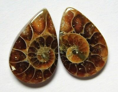 8.20 Cts Natural Ammonite (17mm X 10.7mm each) Loose Cabochon Match Pair