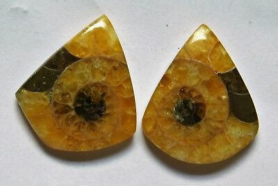 26.60 Cts Natural Ammonite (22mm X 18.6mm each) Loose Cabochon Match Pair