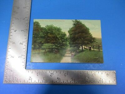 Vintage Bloody Lane, Antietam Battlefield Maryland Nature Post Card PC63