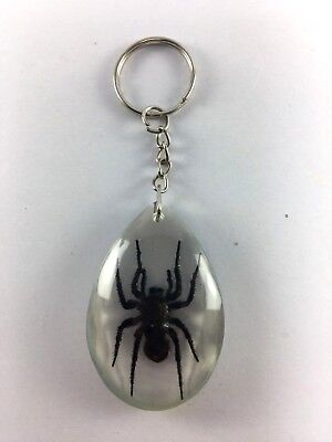Spider Real keyring keychain taxidermy insect  Bug entomology in Aprox Resin