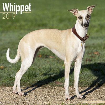 Calendrier 2019 - WHIPPET