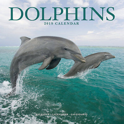 Calendrier 2019 - DAUPHINS