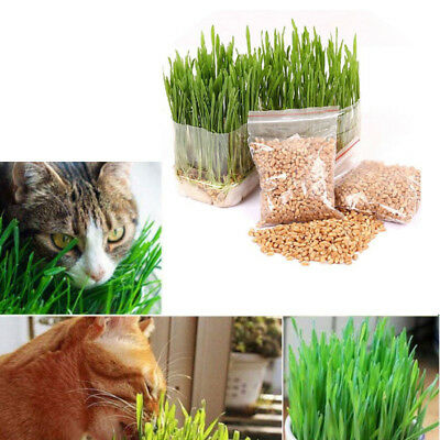 Feed Cat Natural Sweet Oat Grass Seeds Grinding for Cats and Other Pets 150g/Bag