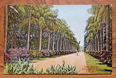 Vintage Postcard  Palm Avenue, Botantical Gardens,Calcutta. India. 1904