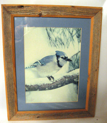 Photo Blue Jay Bluejay On Snowy Branch Wormy Wood Frame Signed
