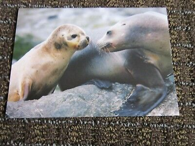 Sea Lions Blank Note Card Sweet Photo UNUSED Collectible Suitable for Framing