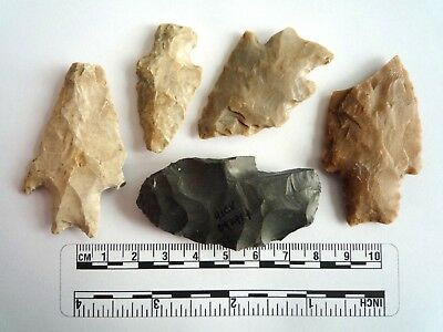 Native American Arrowheads found in Texas x 5, dating from approx 1000BC  (2279)