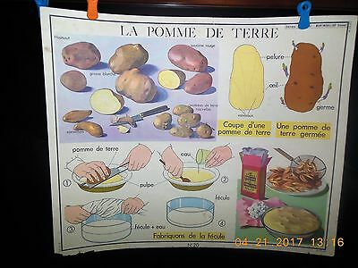 French Vintage Teaching School Poster 1960 Double Sided #20 La Pomme #19Le Fleur