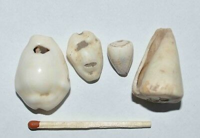 (9096) Lot of 4 Cowry shell money from Silk Road, Samarqand Soghd.
