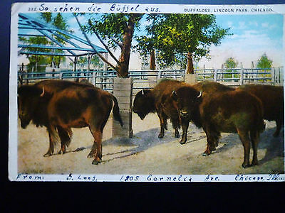 Buffaloes, Lincoln Park, Chicago 1927