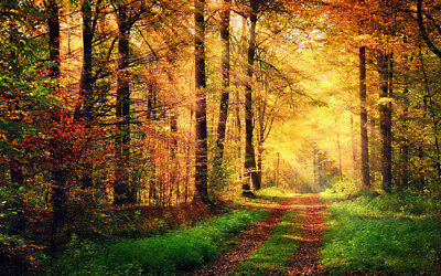 Autumn Forest Scenery With Sunshine Photography Background Studio Props Backdrop