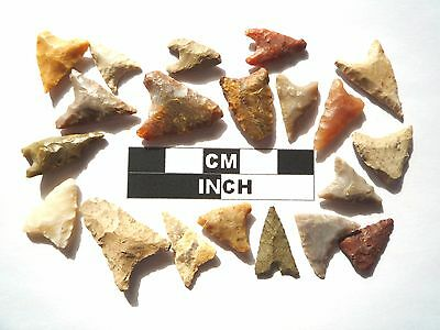 20 x Triangle Style Neolithic Arrowheads - 4000BC - (987)