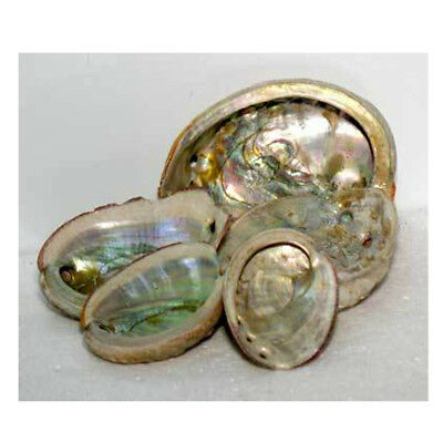 Natural Abalone Shell Mother Of Pearl Sea Shell (Rough Exterior) Smudging