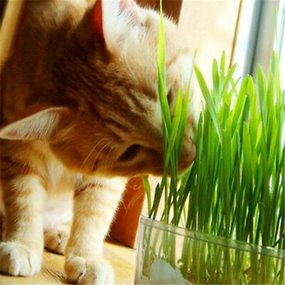 3Bag Harvested Cat Grass approx 800 Seeds Organic Cat snack Grass Seeds