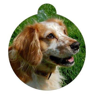 English Cocker Spaniel Breed Picture Pet ID tag
