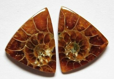 13.60 Cts Natural Ammonite (18mm X 16mm each) Loose Cabochon Match Pair