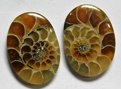 28.10 Cts Natural Ammonite (22.4mm X 16mm each) Loose Cabochon Match Pair