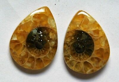 13.15 Cts Natural Ammonite (18mm X 13mm each) Loose Cabochon Match Pair
