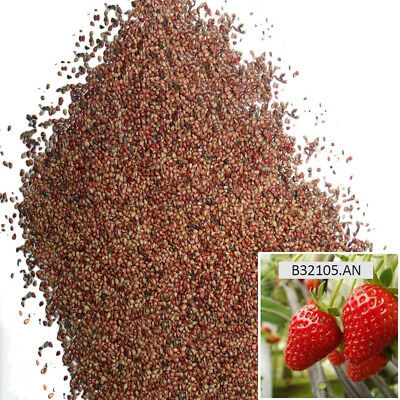 100Bag Red Strawberry Seeds Garden Fruit Plant Sweet&Delicious Potted Fruit Home