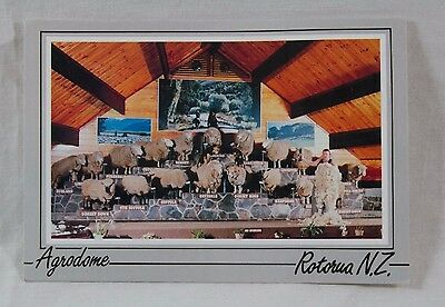 Vintage Postcard Agrodome Rotorua City of NZ Weird Sheep Contest