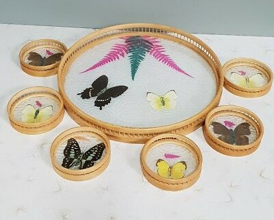 TAXIDERMY BUTTERFLY DRINKS TRAY & COASTERS ~ VINTAGE RETRO TIKI BAR 1960's 70's