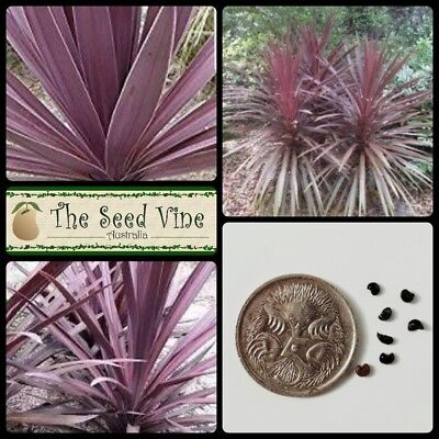 10 PURPLE CABBAGE TREE SEEDS (Cordyline australis purpurea) Native Hardy Drought