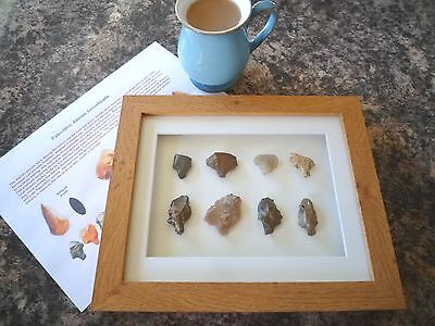 Paleolithic Arrowheads in 3D Picture Frame, Authentic Artifacts 70,000BC (Y001)