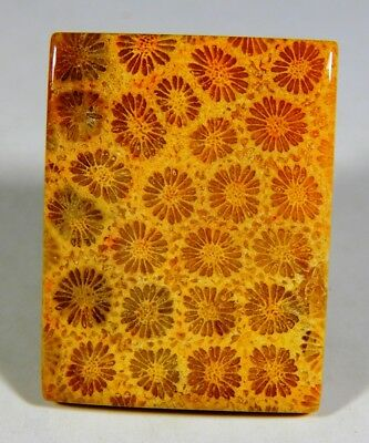70 Ct Natural Lovely Flower Fossil Coral Agatized Octagon Cabochon Gemstone B417