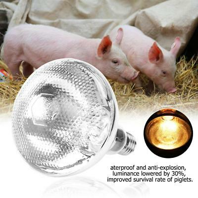Piglet Breeding Waterproof Infrared Heat Lamp Bulb Explosion-Proof Surface SS