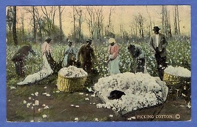 Cotton Field With Black Workers Picking Cotton, Black Americana Postcard 1912