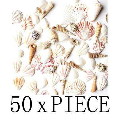 Mixed Ocean Beach Fairy Garden Assorted Seashell Marine Life for Decorations Art